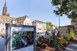 Journée du patrimoine © G.Engel pour Strasbourg Eurometropole