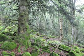 Forêt ancienne et mature © TL-RNNCS