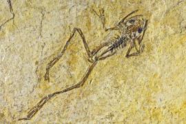 Fossile sur plaquette calcaire oligocène - © V. Damourette / Coeurs de Nature / SIPA