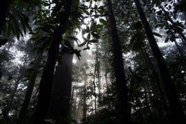 Lever du jour, réserve naturelle de Trésor - © L. Collado