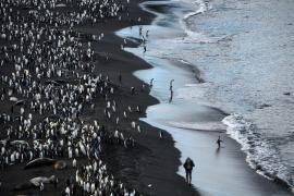 Je ne fais que passer, archipel Crozet de la réserve naturelle des TAF - © A. Dervaux