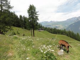 Chalet d'alpage au Plan de l'aiguille - © RNN des Hauts de Villaroger