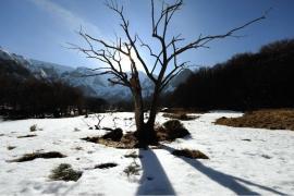 Arbre à contre-jour - © J. Witt / Coeurs de nature / SIPA