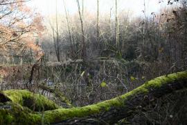Mare forestière - © E. Hornier