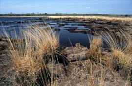 Vue de la réserve - © R.-P. Bolan / Bretagne Vivante