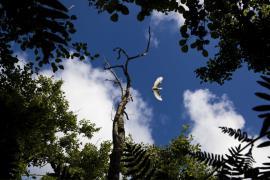 Aigrette décollant - © F. Lepage / Coeurs de nature / SIPA