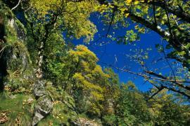 Forêt à caractère naturel - © RN Frankenthal Missheimle