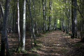 Chemin forestier - © M. Cristofani / Coeurs de nature / SIPA