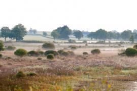 Vue du marais - © S. Parouty / CG23