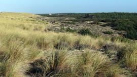 Dune blanche et dune grise - © RNNDMH