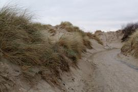 Dunes à Leffrinckoucke - © M.-L. Nguyen / Wikipedia