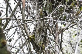 Jeune héron cendré - © F. Lepage / Coeurs de nature / SIPA