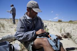Baguage d'un hutrier-pie par un garde de la RN - © F. Lepage / Coeurs de Nature / SIPA