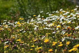 Prairie fleurie - © J. Heuret