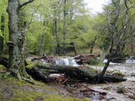 La rivière Massane - © RN Forêt de la Massane
