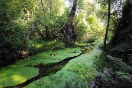 Bras mort dans la réserve - © J. Witt / Coeurs de nature / SIPA