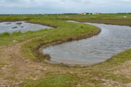 Dans les polders - © Ji Elle / WIkipedia