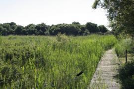 Sentier dans le marais - © S. Stauth