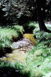 Ruisseau dans la réserve naturelle - © L. Domergue