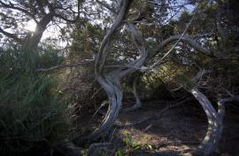 En Camargue - © M. Cristofani / Coeurs de nature / SIPA