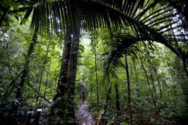 Dans la jungle de la réserve - © M. Cristofani / Coeurs de nature / SIPA