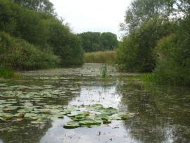 Sur l'étang - © Guyot / CEN Lorraine