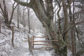 Sentier dans la réserve naturelle - © E. Hornier