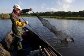 Pêcheur professionnel relevant une nasse - © F. Lepage / Coeurs de nature / SIPA