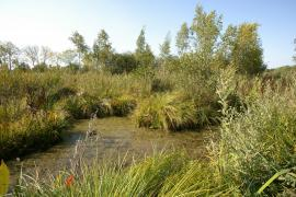Habitat de reproduction grenouilles des champs - © PNR Scarpe-Escaut