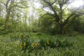 Mare forestière - © P.-M. Aubertel