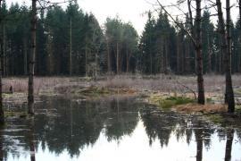 Forêt inondée - © E. Hornier