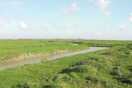 Canal central de la réserve - © CR Pays de Loire