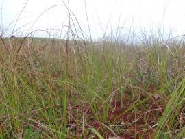Haut marais à sphaignes rouges, habitat à très fort enjeu patrimonial - © Luc Belenguier/SMPNRVA
